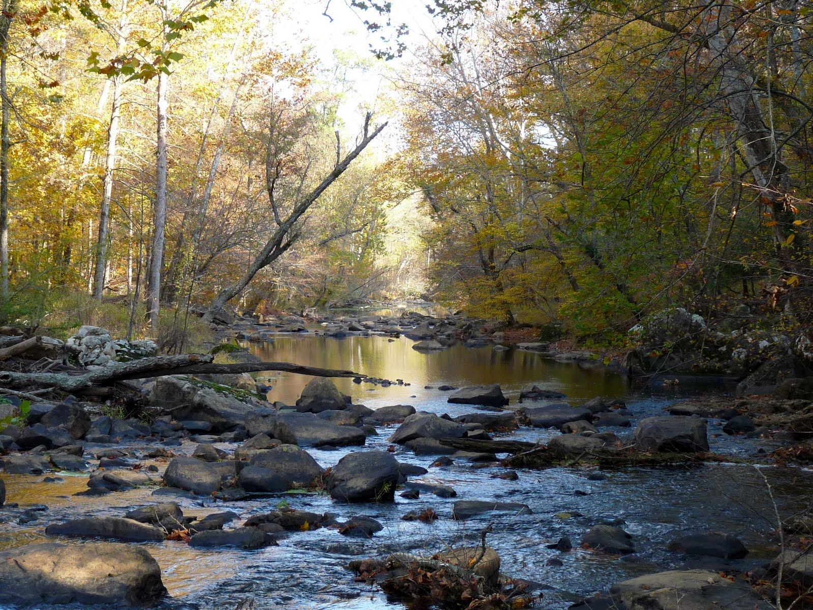 Eno River fall foliage - Em for Marvelous -