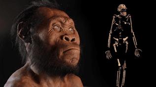 هومو ناليدي كما تصوره الأركيولوجيون
