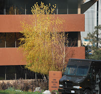 photo of tree, office building and UPS truck