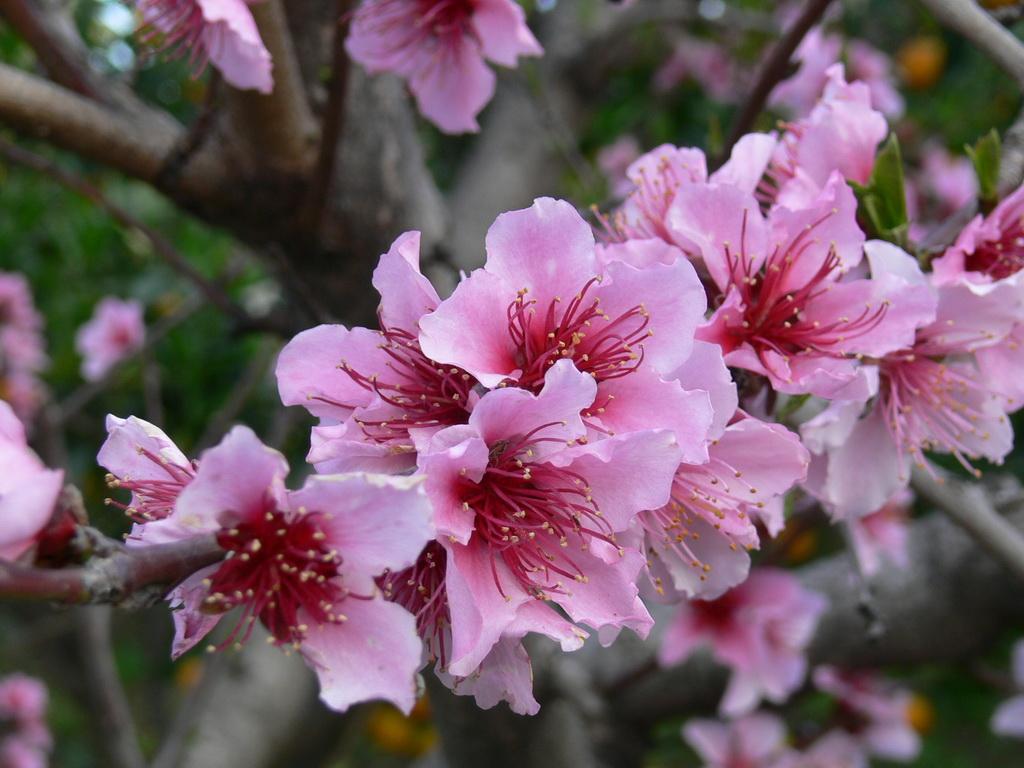 Le meraviglie del mondo il significato dei fiori fior di for Fiori di primavera