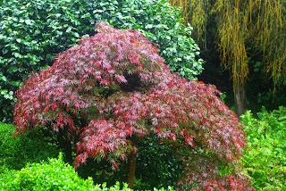 Luarca, Jardines de la Fonte Baixa, arbusto