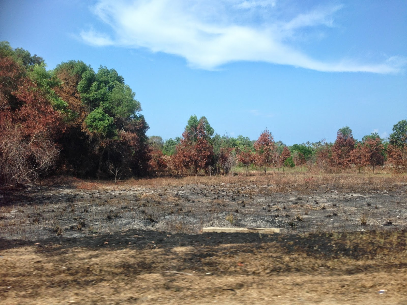 More burned foliage along the way in Terengganu