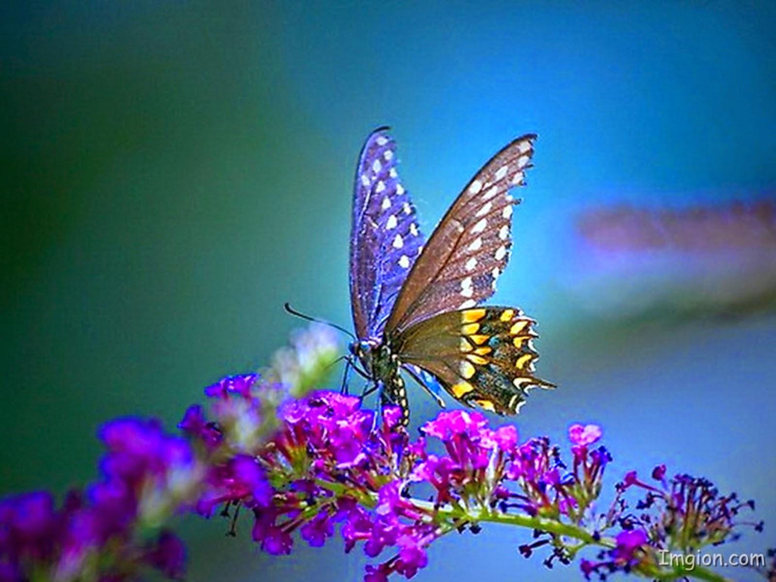 Best wallpaper beautiful butterfly wallpapers free download for Butterfly wallpaper