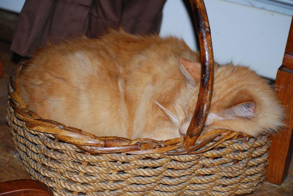 23. basket case by rockhound0508