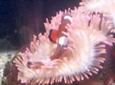 Haus des Meeres Aquarium