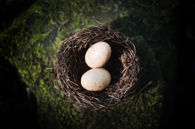 image of eggs in a nest