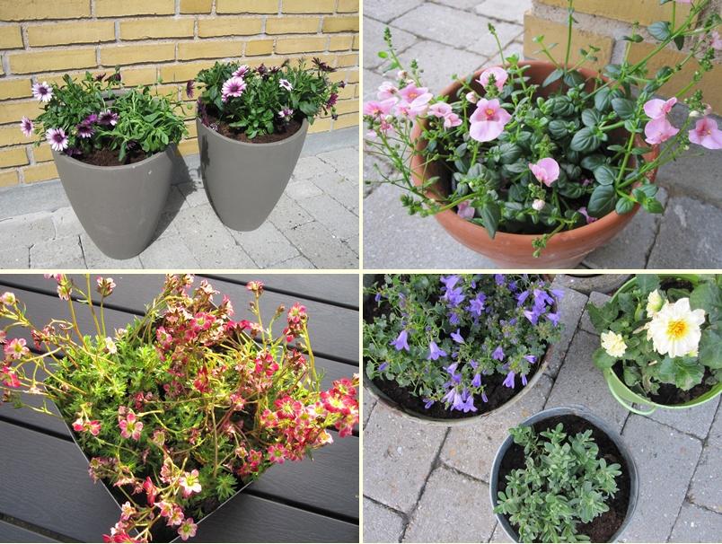 Frk. schmetterling: blomster på terrassen