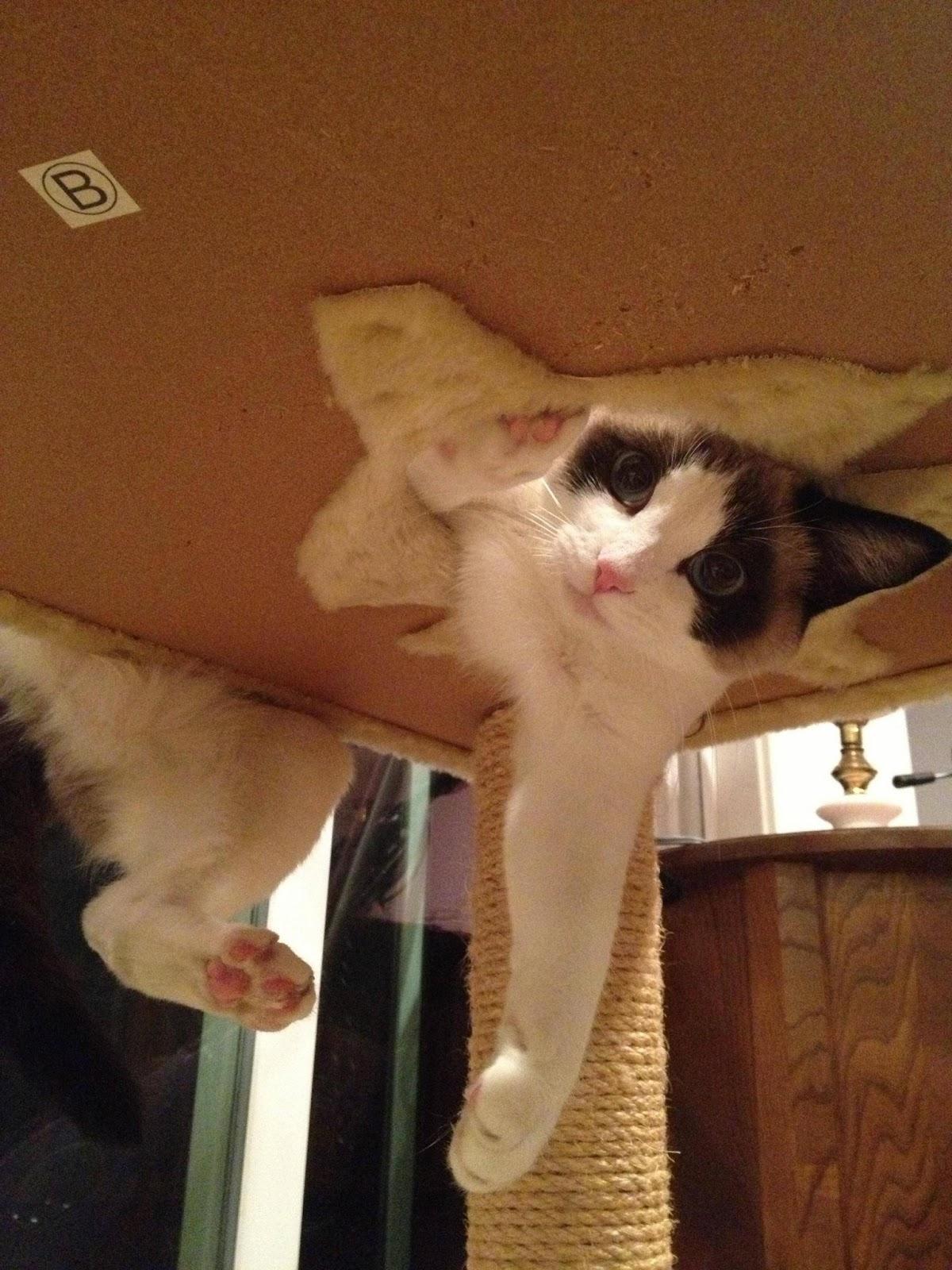 Meet Baxter, the photogenic cat (10 pics), cute photogenic cat, cute cats, cat photos, ridiculously photogenic cat