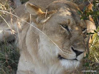 Reisen Afrika Tansania Ngorongoro Krater