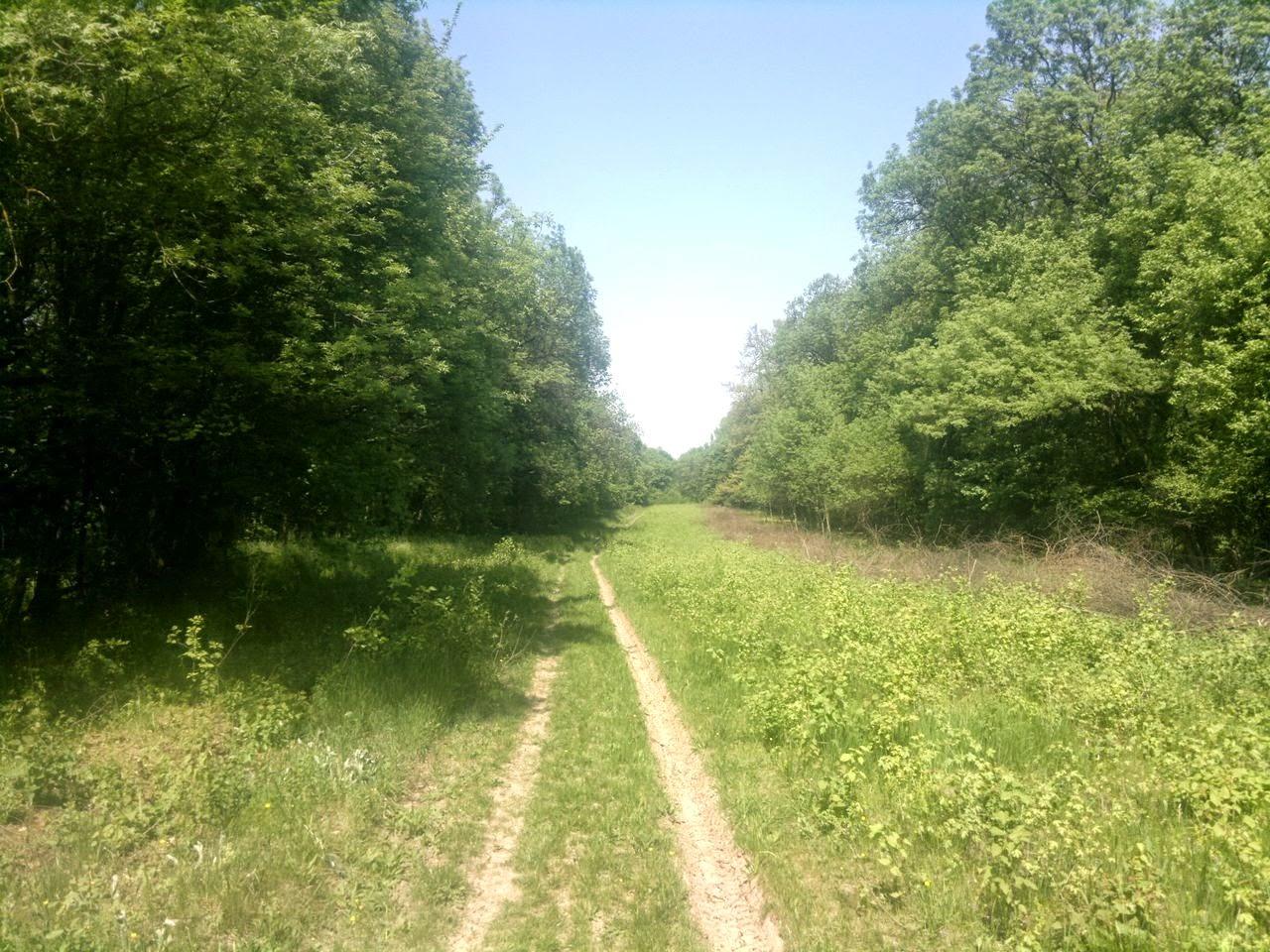 M-am îndrăgostit de Pădurea Verde din Timişoara. Trail running-ul este soluţia ideală când te antrenezi pentru ultrarunning