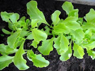 11 марта, салат