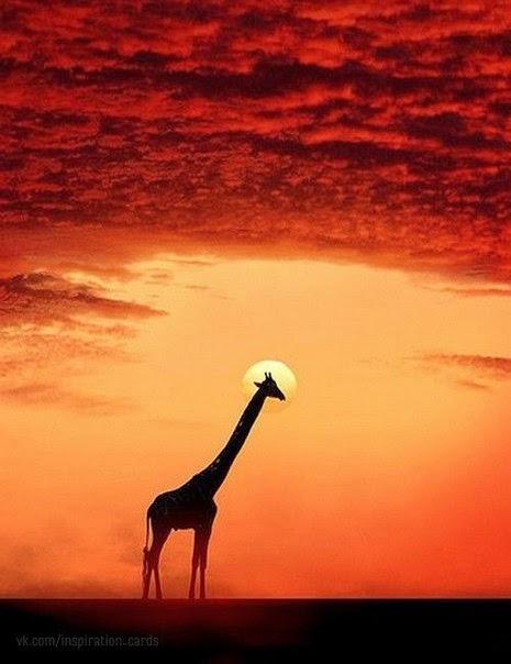 Жираф почему ты высокий такой песня скачать
