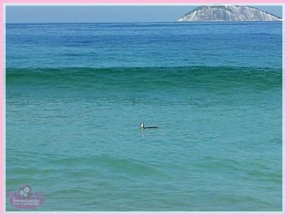 Pinguim na Praia de Ipanema no Rio de Janeiro