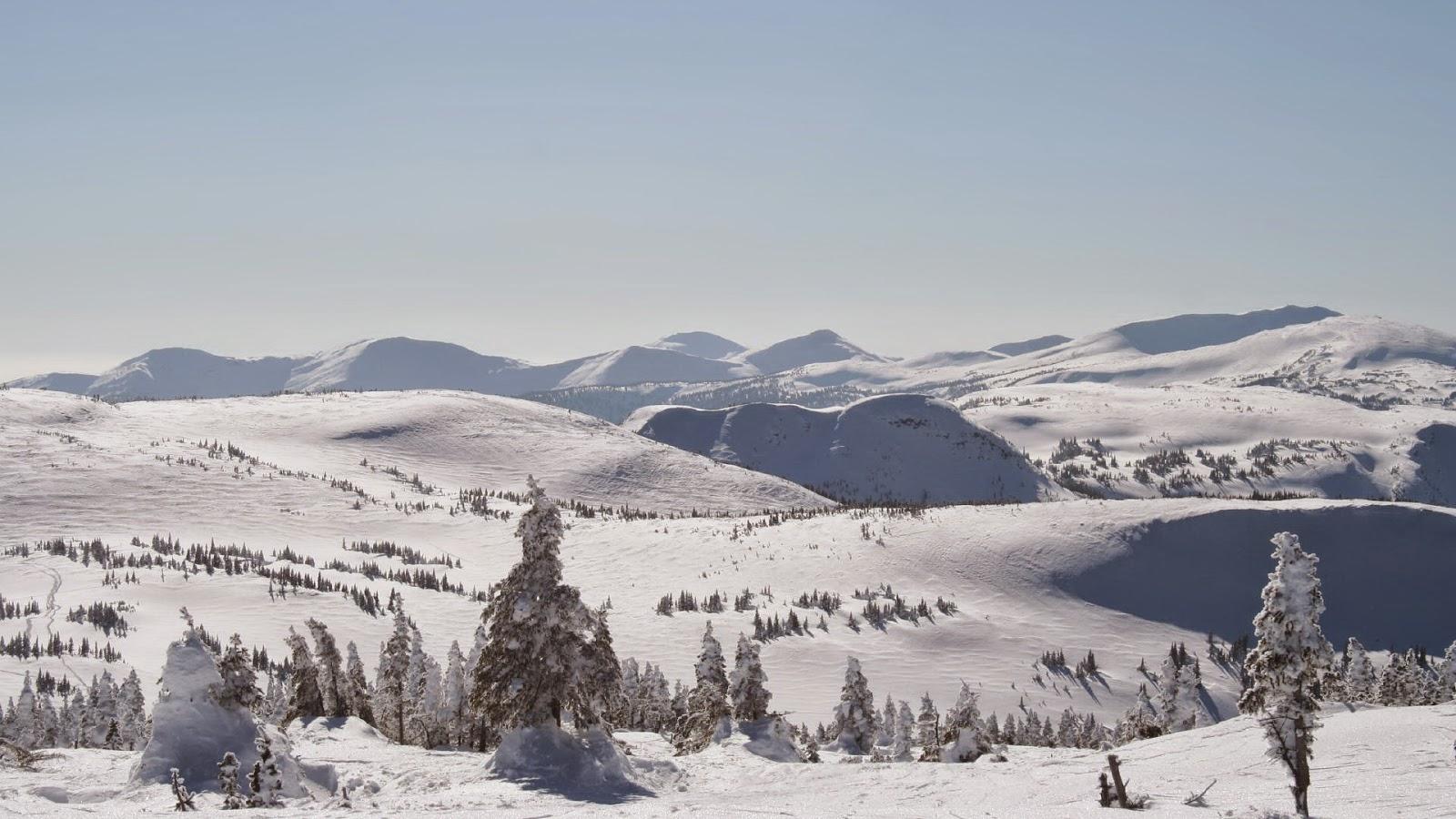 Wallpaper met winter landschap