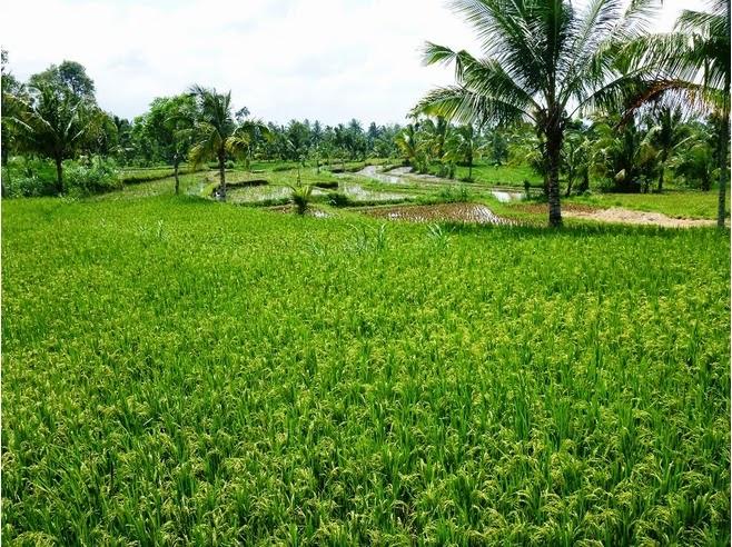 tetebatu, gunung rinjani, keindahan alam, desa wisata di lombok