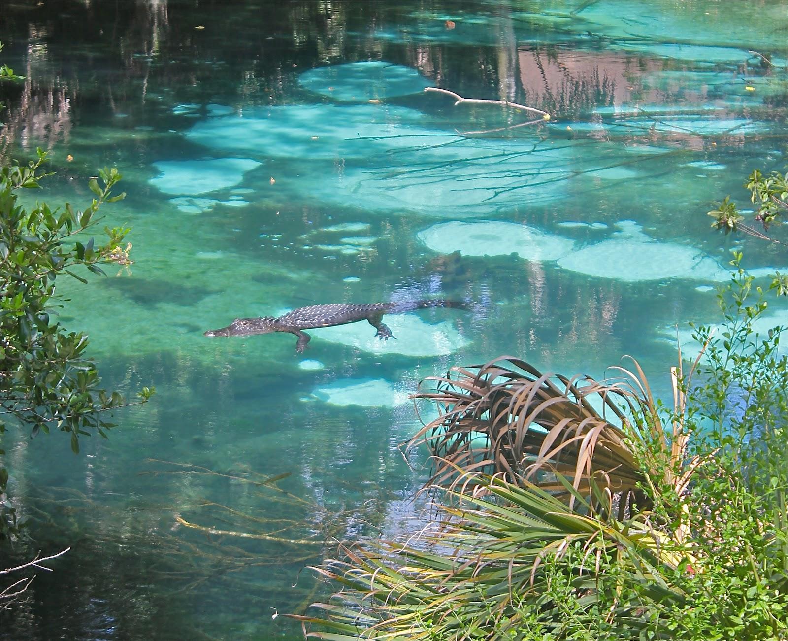 florida u0027s threatened springs florida u0027s threatened springs   phillip u0027s natural world  rh   majikphil blogspot