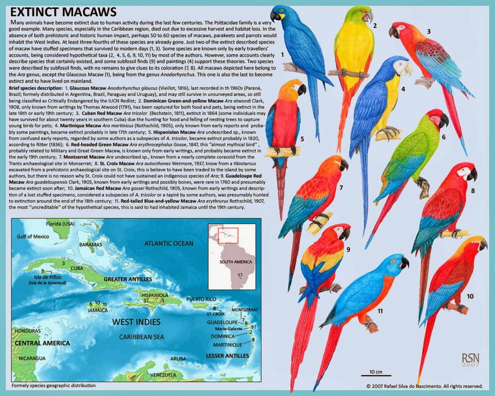 Reconstructions of the likely appearance of the various extinct ...