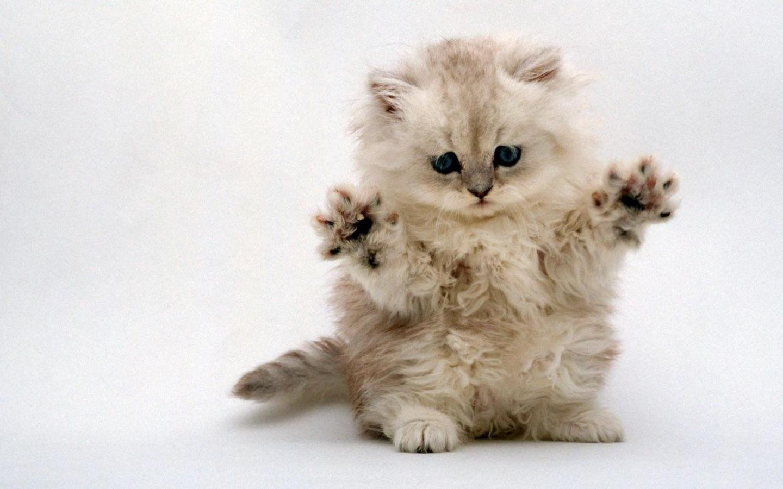 [Image: kirsten+sad+Kitten.jpg]