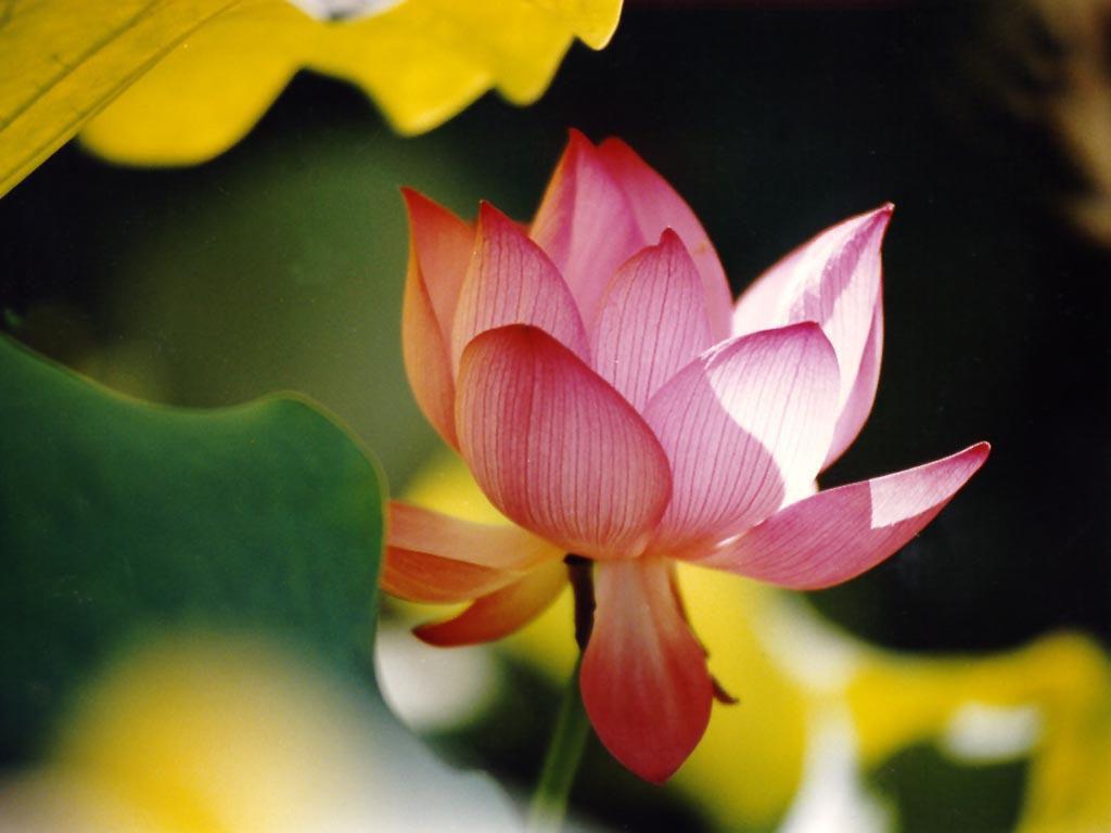 http://4.bp.blogspot.com/-0ninXhvyMHA/TfZMrhq61ZI/AAAAAAAAAH8/0-aKoYD02LU/s1600/Lilies+Flowers+Wallpaper11.jpg