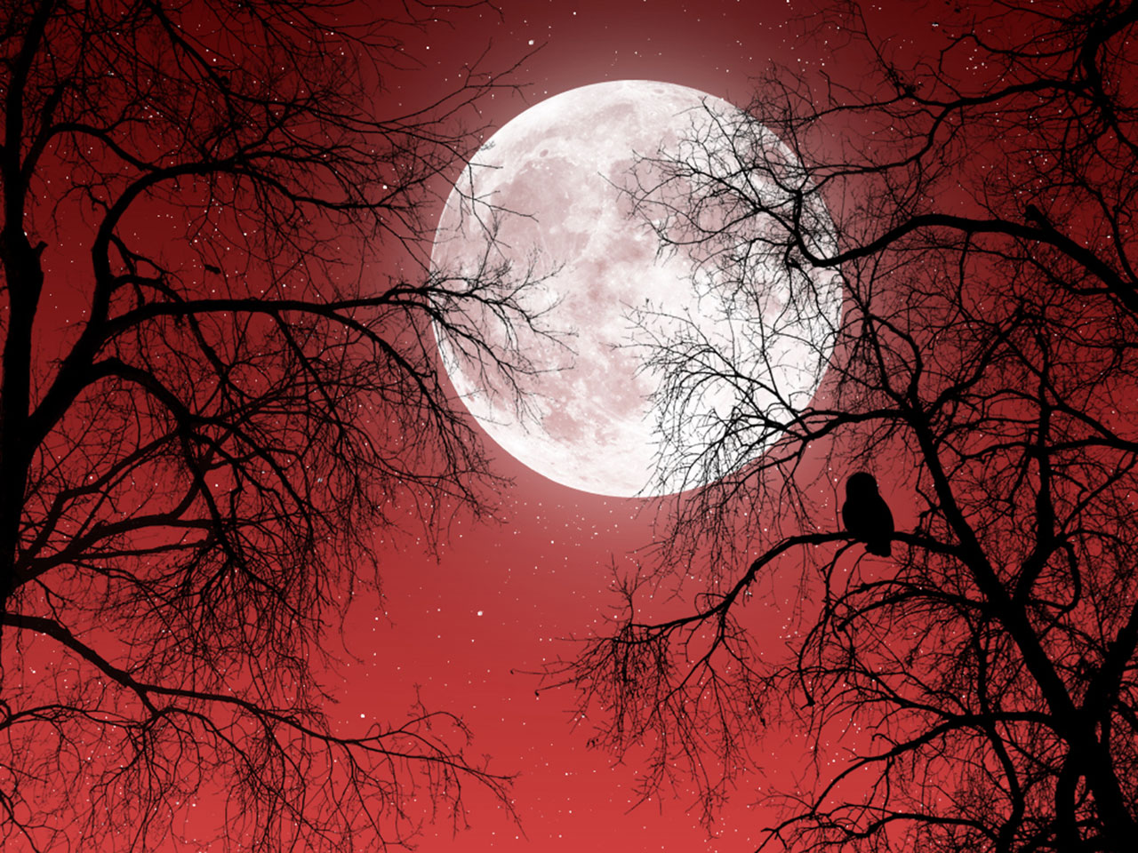 http://4.bp.blogspot.com/-0nnbYTHYG-Y/T930lyIuIAI/AAAAAAAAAK4/ULlKCIz5ur4/s1600/Night-Owl-And-Moon-Wallpaper.jpg