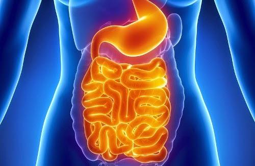 Coloniza tu tubo digestivo