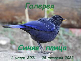 """Галерея """"Синяя птица"""" у Тани."""