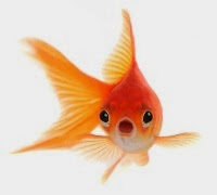life in a goldfish bowl