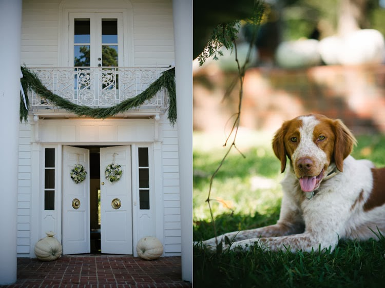 stunning front porch staged for the wedding day with wreaths garland and a springer spaniel