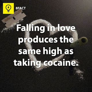 love facts , falling in love produces the same high as taking cocaine.