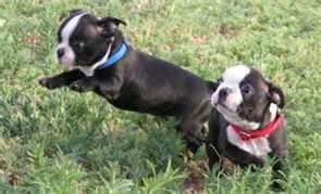 Image Result For Does Don Sullivan Dog Training Work