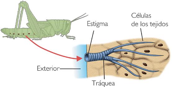 en que organismos se lleva a cabo: