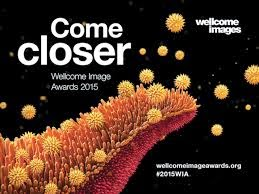 Wellcome Image Awards 2015.