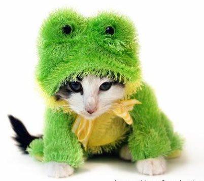 Сat frog