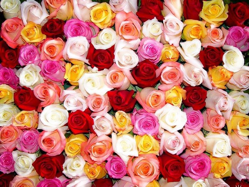 http://4.bp.blogspot.com/-0q-WzLgJnxc/UE90Fk0XNCI/AAAAAAAAACg/Rr-slKkOgtI/s1600/0_896c6_bd973767_XL.jpg