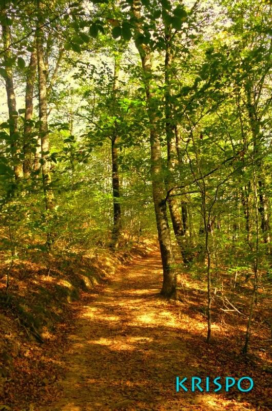 paisaje de otoño con arboles y sendero