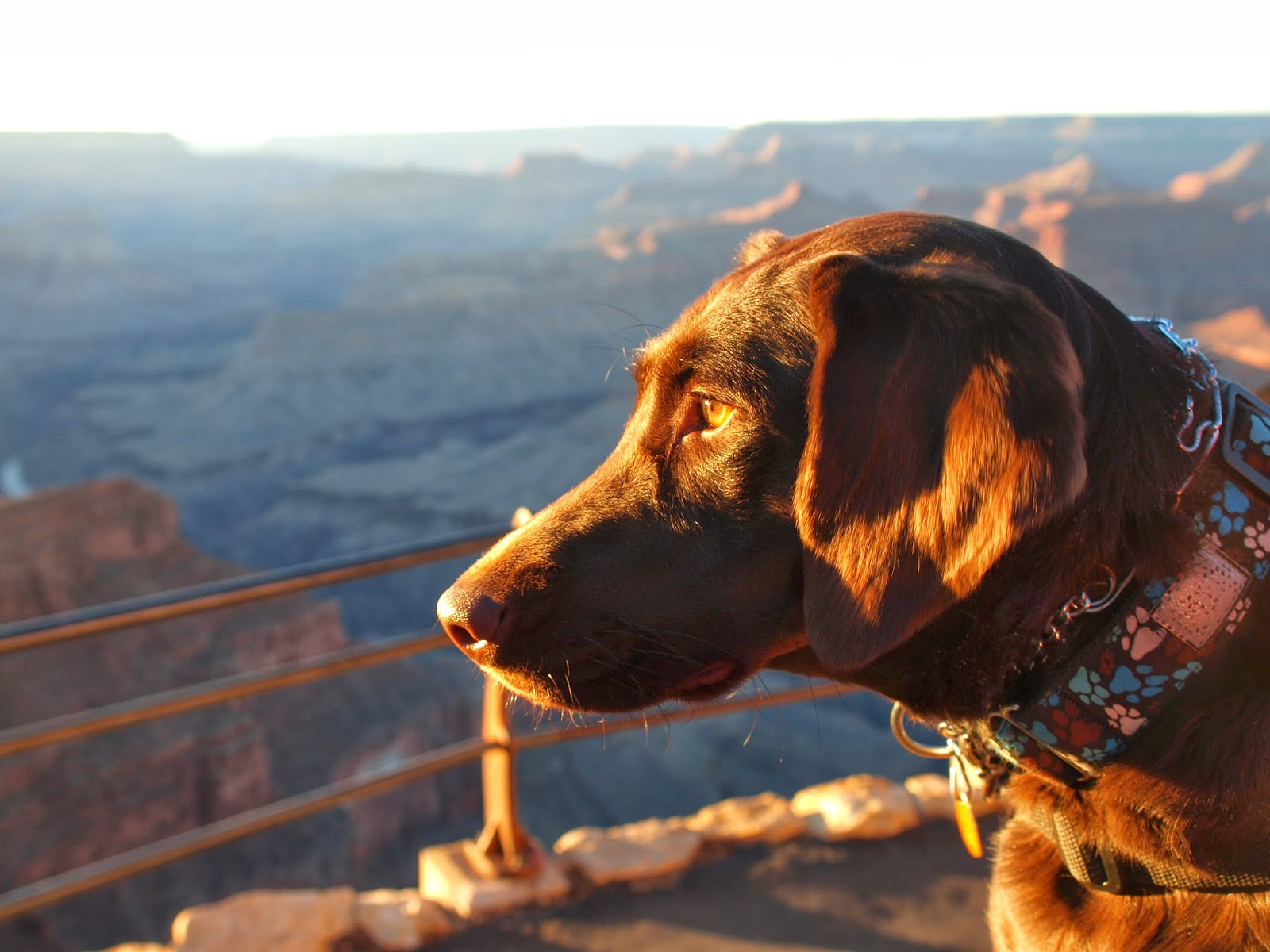 Our Service Dog, Sherly, at the Grand Canyon