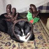 A very Benny Christmas....