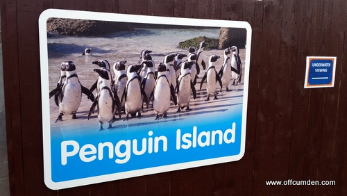Penguin island Scarborough
