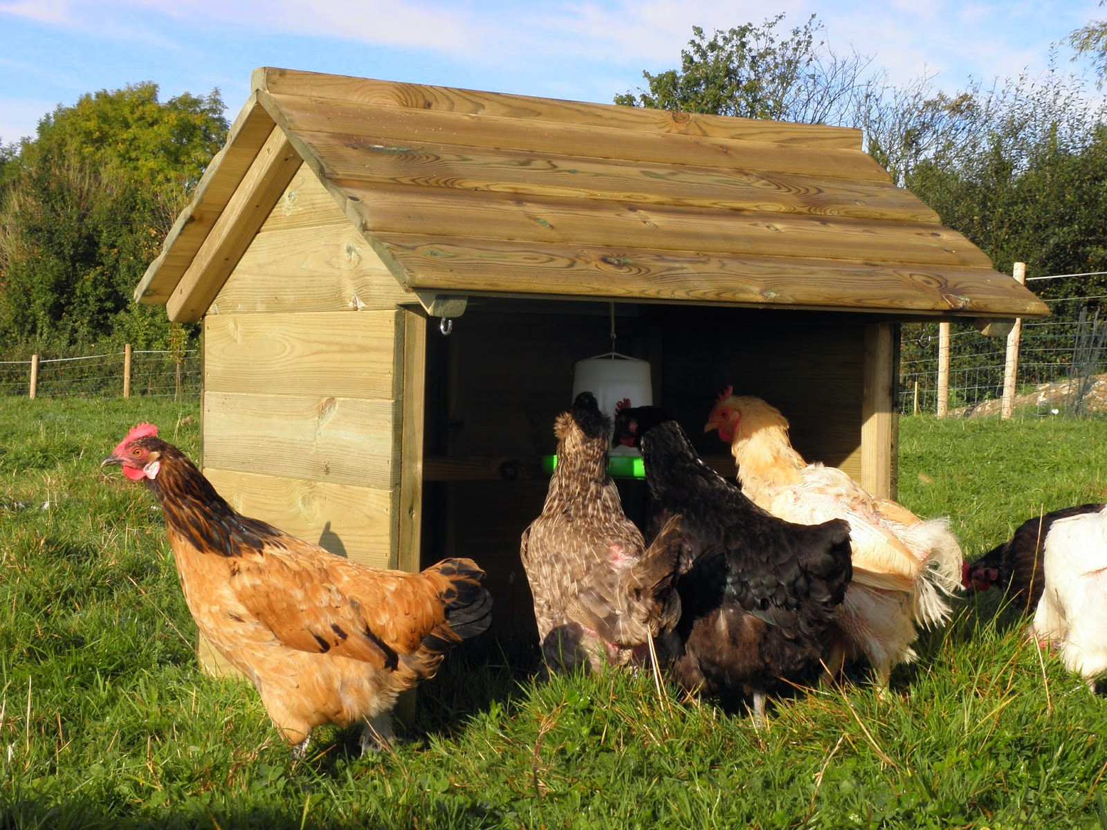 Providing shade for hens in hot weather