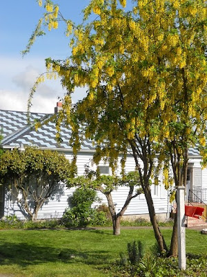 YELLOW TREE - CHECK OUT THE ROOF OF THE HOUSE