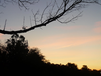 dawn through tree branches