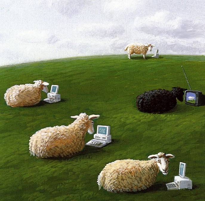 Michael Sowa sheep