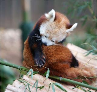 Ảnh đẹp động vật, ảnh động vật ngộ nghĩnh