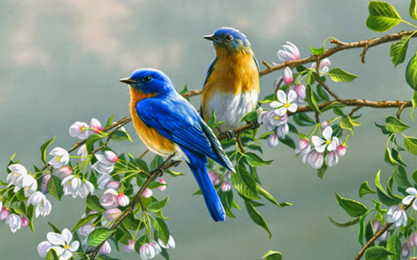 Gambar Wallpaper Burung HD