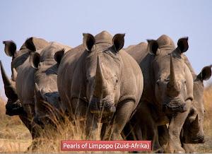 Parels van Limpopo