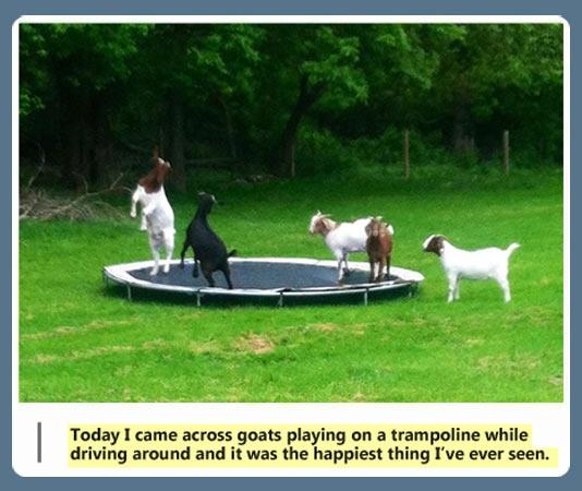 gambar unik terbaru gambar hewan