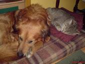 Moje zwierzaczki pies Maks i kotek Malwin -już go nie ma z nami..:{
