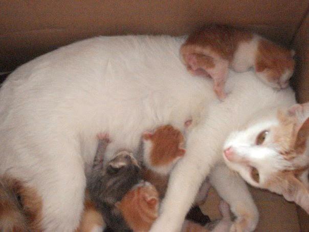 Kangen Kucing Mati Kucing Ku Telah Tiada Kemana Kucing Ku