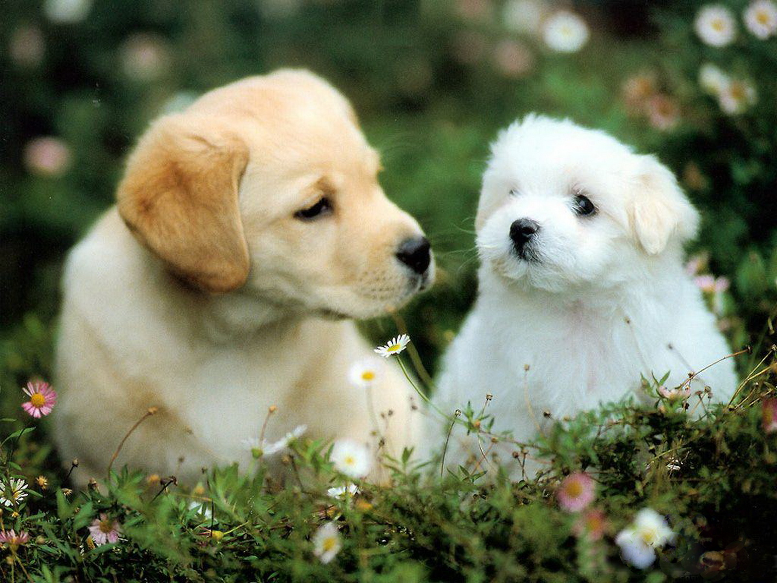 WallpaperfreekS: HD Cute Dogs Wallpapers 1600X1200