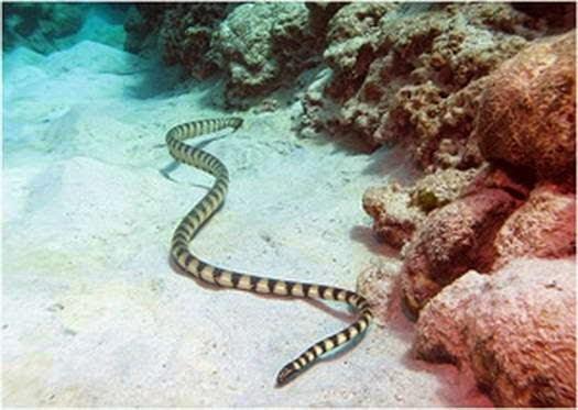 Hewan Pantai Paling Berbahaya
